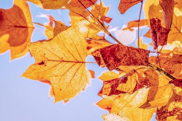 nebe na podzim