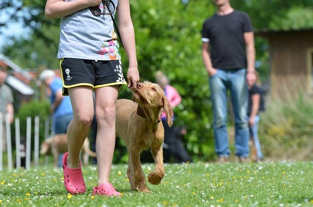 maďarský vorstehhund